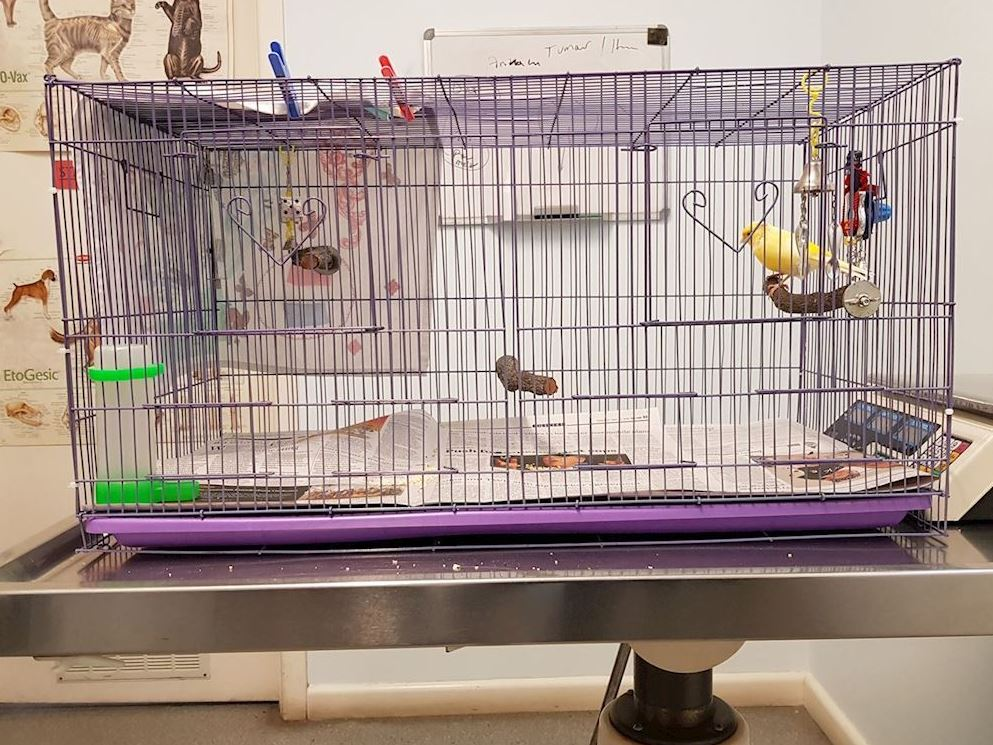 canary vet - ideal cage